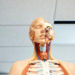 uppe respiratory tract